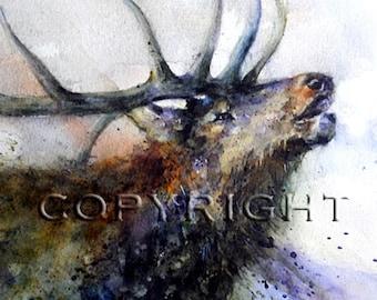 BULL ELK Large Watercolor Print by Dean Crouser