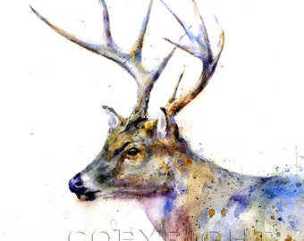 WHITETAIL DEER Watercolor Print by Dean Crouser