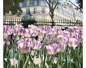 Tulips at Luxembourg Garden, Paris Photography, Lavender  - 8x10 - Floral Photo - Springtime in Paris - Original Fine Art Photograph