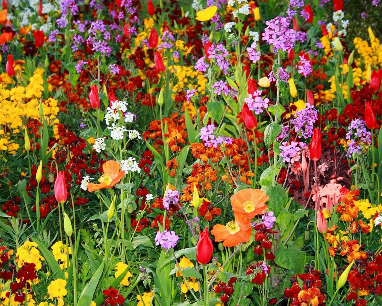 Flower garden print paris france photo french decor for Colorful plants for landscaping
