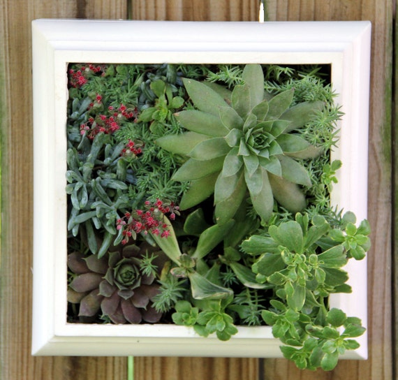 Reserved for Micheal - Squared Living Wall succulent planter  - Comes preplanted & ready to hang