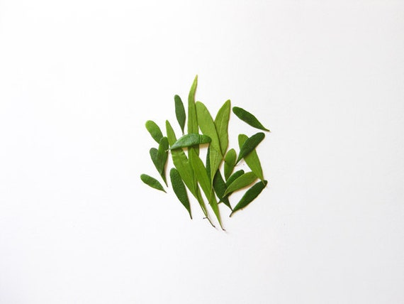 Green Melody No.1 Minimal Photography - 8x10 Botanical Photo Print - Modern Home Decor
