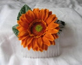 Comb orange flower, daisy on green leaves