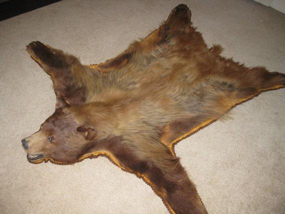 Attractive Antique Bear Skin Rug   Rare Cinnamon Phase Black Bear Christmas SALE  Special