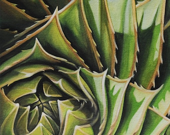 "Fine Art Print ""Spiral Aloe No. 1"" Limited Edition"