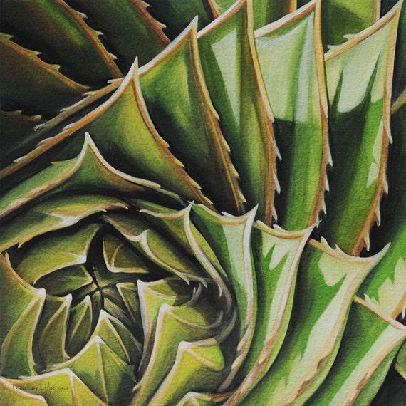 Fine Art Print Spiral Aloe No. 1 Limited Edition