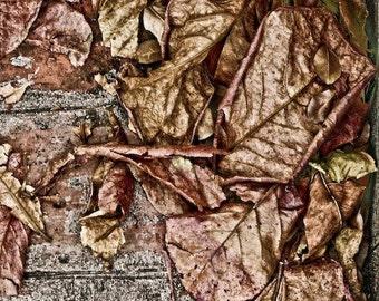 Rustic Home Decor Autumn Leaves Fall Nature Fine Art Photography Print 4x6 Wall art