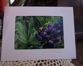 Blank  Photo Note Cards