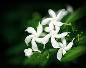 Jasmine Pheromone Perfume - 10ml - Floral Body Fragrance that is Scientifically Designed to Appeal to Human Instinct