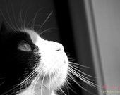 IN STOCK- Through a Cat's Eye- Fine Art Photopgraphy print 5x7 by Alana Gillett- Black White Cat Feline Pet Photography Wall Art Home Decor