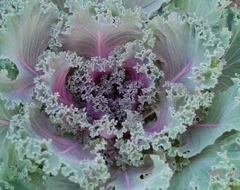 Cabbage Fractal- Fine Art Photopgraphy print 5x7 by Alana Gillett- Amethyst Lavender Mint Green Geometric Plant Home Decor Wall Art