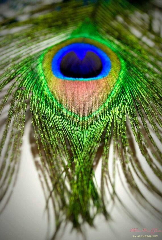 Eye of the Peacock- Fine Art Photography print 5x7 by Alana Gillett- Feather Macro Lime Indigo Sapphire Shimmer Navy Eye Home Decor Wall Art