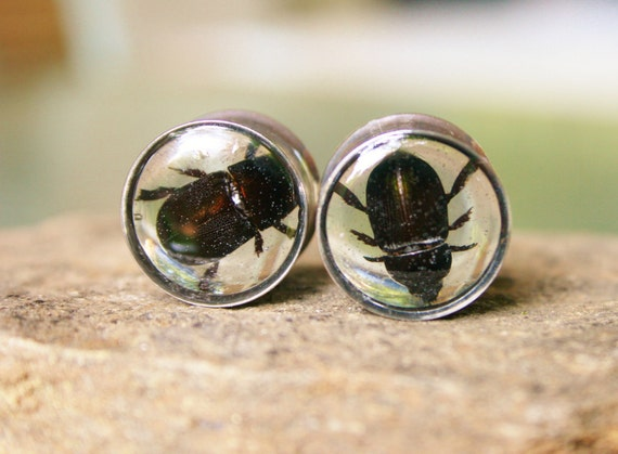 "Black Beetle Plugs Resin for Gauged Ears Made With Real Insects Size 5/8g 5/8"" 16mm"