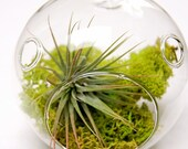 Mini Moss Air Plant Terrarium