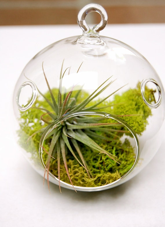 Mini Moss Air Plant Terrarium