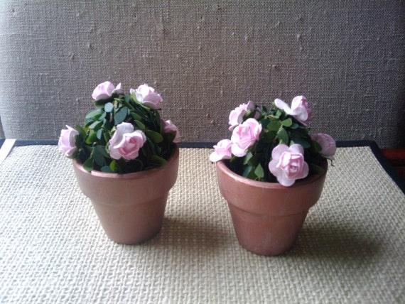 One Rosebush  Pink Roses Green Bush Terracotta Pot