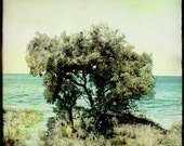 Tree With A Sea View 4... Fine Art Print... Seaside Photography... 8x8