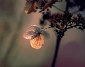 "flower photography grape photograph romantic cottage decor 8x10 ""Light Purple"" - fine art still life flower photo"