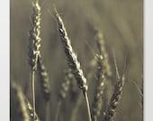 "farmers market  photography ""Dark Harvest"" - rustic photograph - surreal nature - grey slate harvest 10x10 square photo"