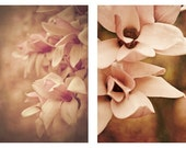 photo Set: Spring color french country shabby chic photograph Magnolia flower photography two fine art photos shabby chic pink honeysuckle