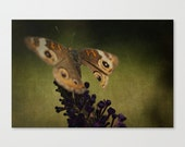"""nature woodland photograph butterfly fine art photographic print forest green orange brown purple """"Under a Tattered Cloak"""""""