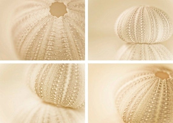 "beach decor nautical photography vacation tan photograph set ""Sea Urchin Collection"" fine art photo cream beige white soft color nature"