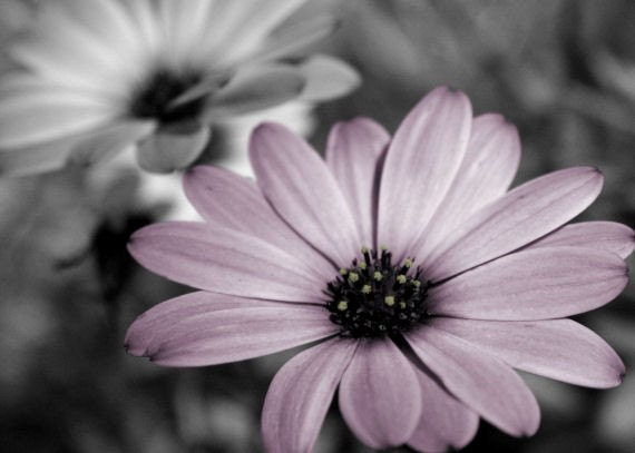 Purple And Gray Wall Art purple flower photograph gray home decor wall art