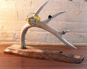 Naturally shed deer antler jewelry stand or decoration(made to order)