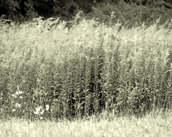 Flowing Field - Fine Art Nature Photograph