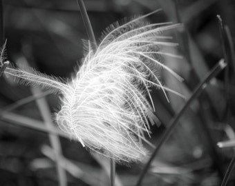Floating Feather - Fine Art Photograph - Black and White Home Decor