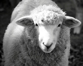 Black and White Sheep - Free Shipping - Home Decor Nature, Easter Lamb, Wool, Animal Fine Art Photograph