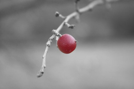 Little Red Berry - Black and White Winter Art Photography, Digital Photograph
