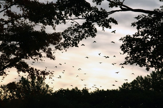 Flock of Birds Flying in the Glowing Sky - Early Morning Sunrise - Home Decor Fine Art Photograph