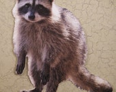 Raccoon Cutout