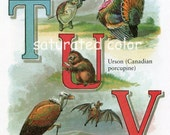 Vintage Alphabet Letter T is for Tortoise Turkey - U is for Urson (Porcupine) - V is for Vulture Vampire Bat - Victorian Alphabet Print