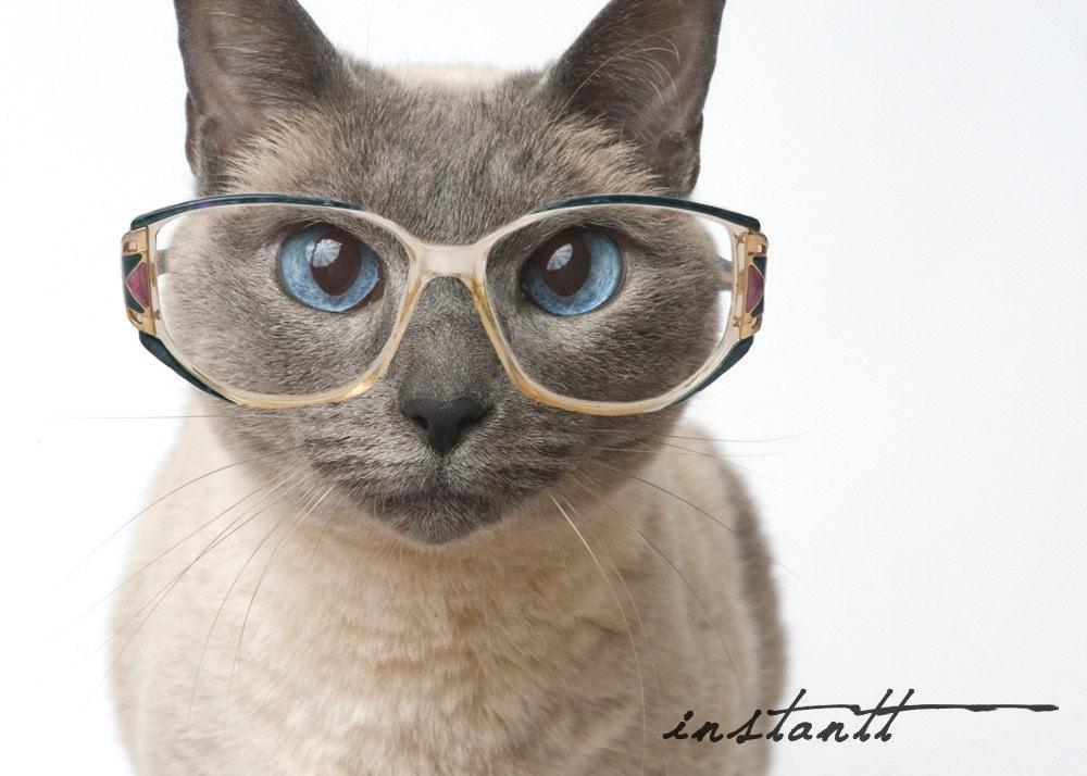 Photographic Print Cat in Glasses 5x7