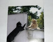 Cats on a wall - Mini Envelope