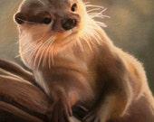 Pastel Drawing Otter Wildlife Fine Art Print - 8 x 10