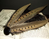 ARTEMIS-pheasant and ostrich feather antique glass button fascinator