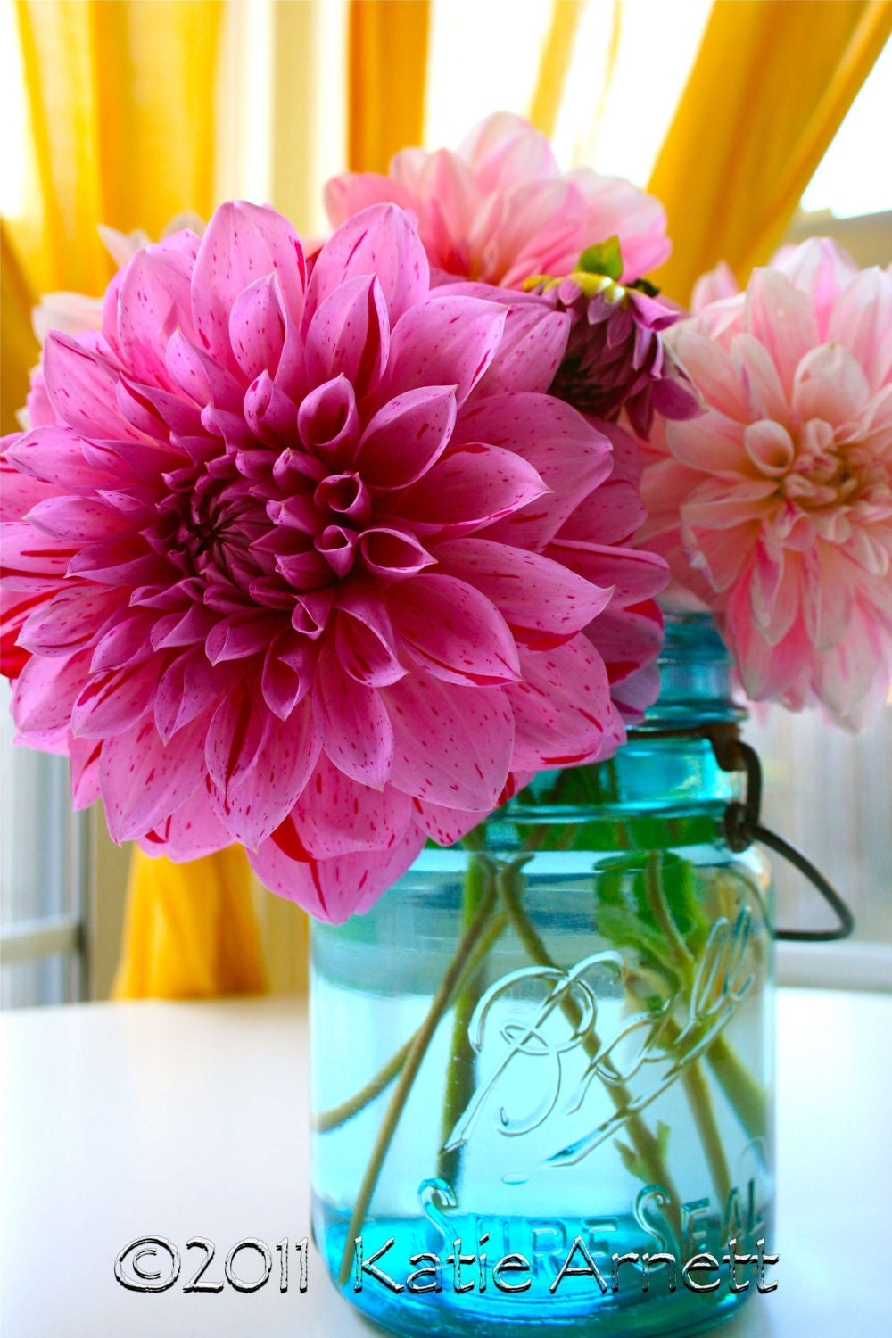 Pink dahlia (With images) | Flowers, Dahlia, Plants |Hot Pink Dahlia Flowers
