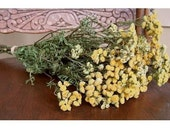 DRIED Tansy FLOWERS Gold Deep Yellow Country Farm Decorating Prim Crafting Floral Rustic Decor Wedding Flowers Golden Buttons