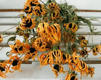 Dried Flowers Natural Rudbeckia Lovely Wildflower Floral Wedding Rustic Shabby Cottage Prim Decor Crafts Wreath Making