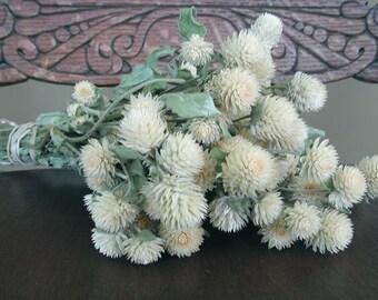 Dried Flower bunch CREAM Globe Amaranth ( Gomphrena) for Wedding, decorating, wreaths, prim, country, cottage