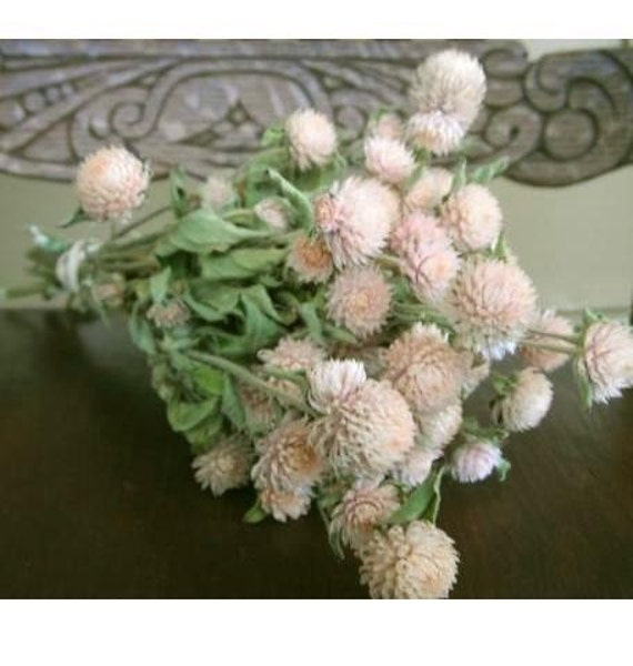 Custom listing for Meghan DRIED FLOWERS All Natural Dried light pale pink Globe Amaranth Flowers prim wedding shower cottage shabby