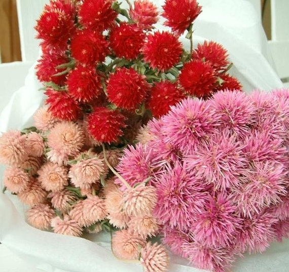 3 Natural Red & Pink Dried Flower Bunches for Wedding, Shower, Wreathmaking, Natural Decor, Nature Crafts