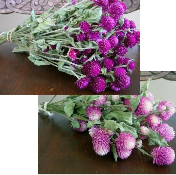 DRIED FLOWERS  Purple Globe Amaranth and Bi Colored Pink Floral Lovely for Wedding Prim Crafts