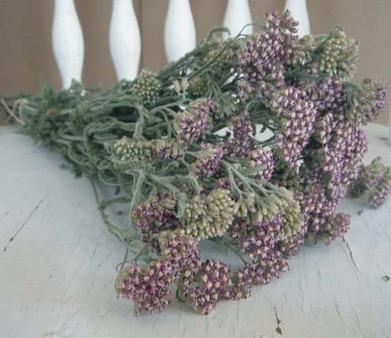 Natural Dried Pastel Yarrow Flowers for Wedding Country Prim Shabby Craft Decor,...