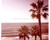 Laguna Beach Palms - Square California Beach Photo 5X5