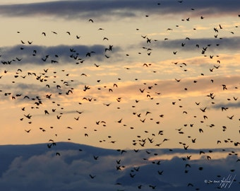 Flock of Birds over a Seattle Sunset - 8X10 Fine Art Photo - Nature Photography, Seattle Photo, Wall Decor