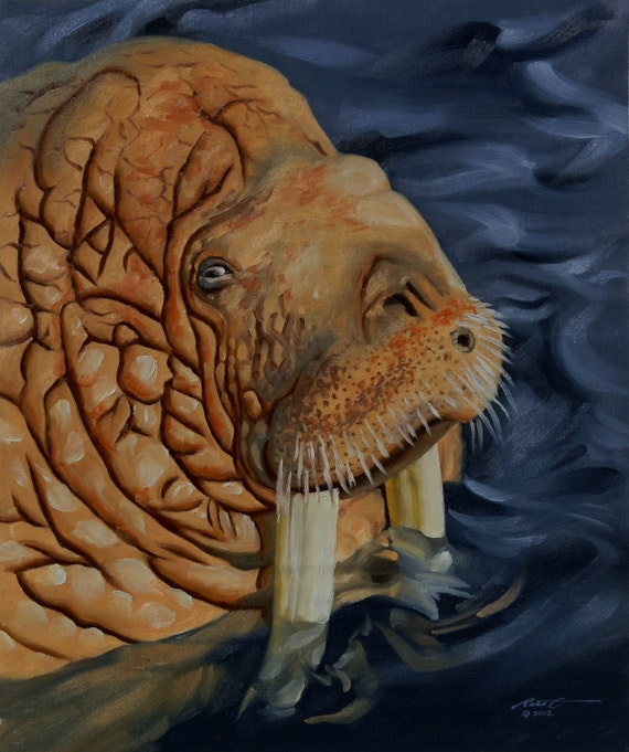 Walrus, wildlife carnivore animal 24x20 oils on canvas painting by RUSTY RUST / W-56